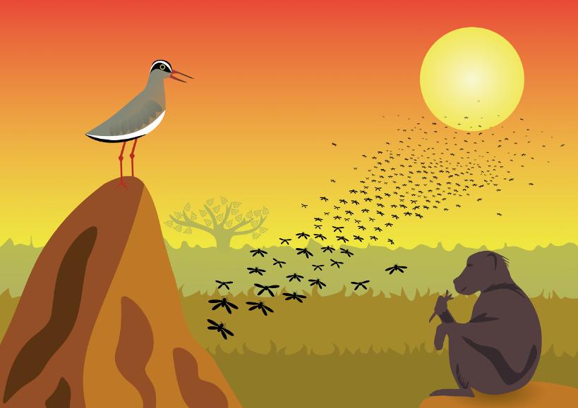 prent uit het boek Ietje Termietje: termieten vliegen massaal uit hun nest