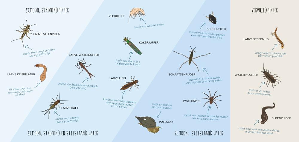 binnenkant van zoekkaart ongewervelde waterdieren