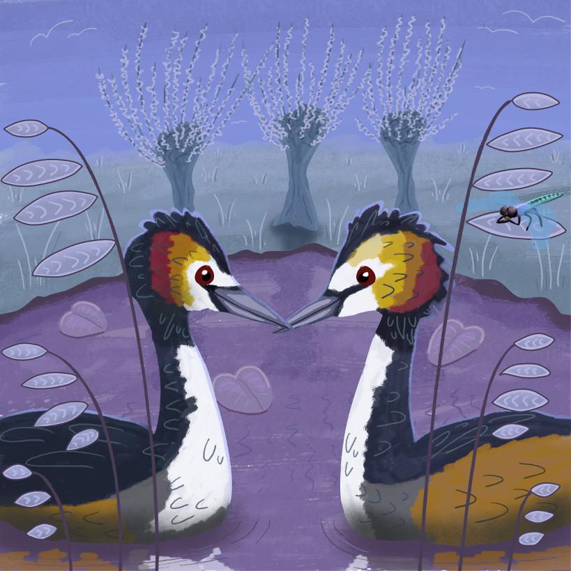 illustratie van twee futen