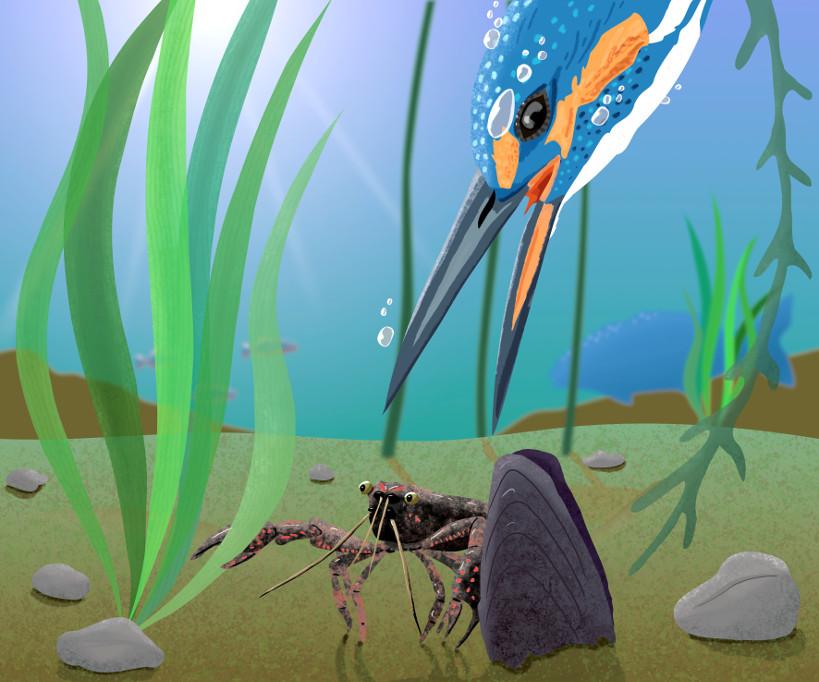 illustratie van ijsvogel die kreeft vangt