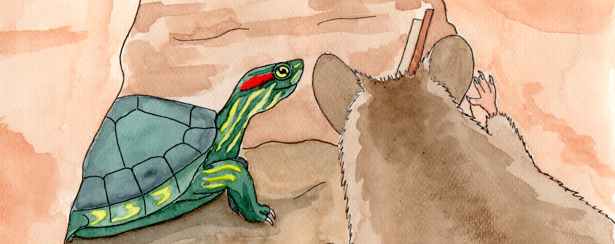 Muis kijkt naar Schildpad